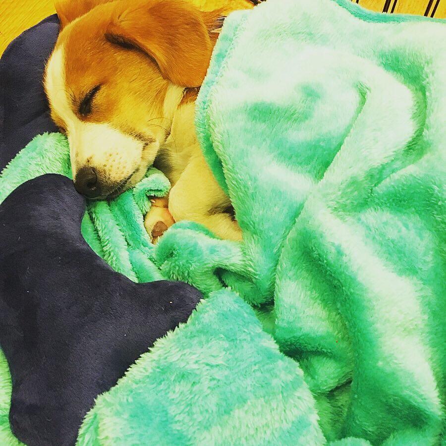 Butter puppy naps