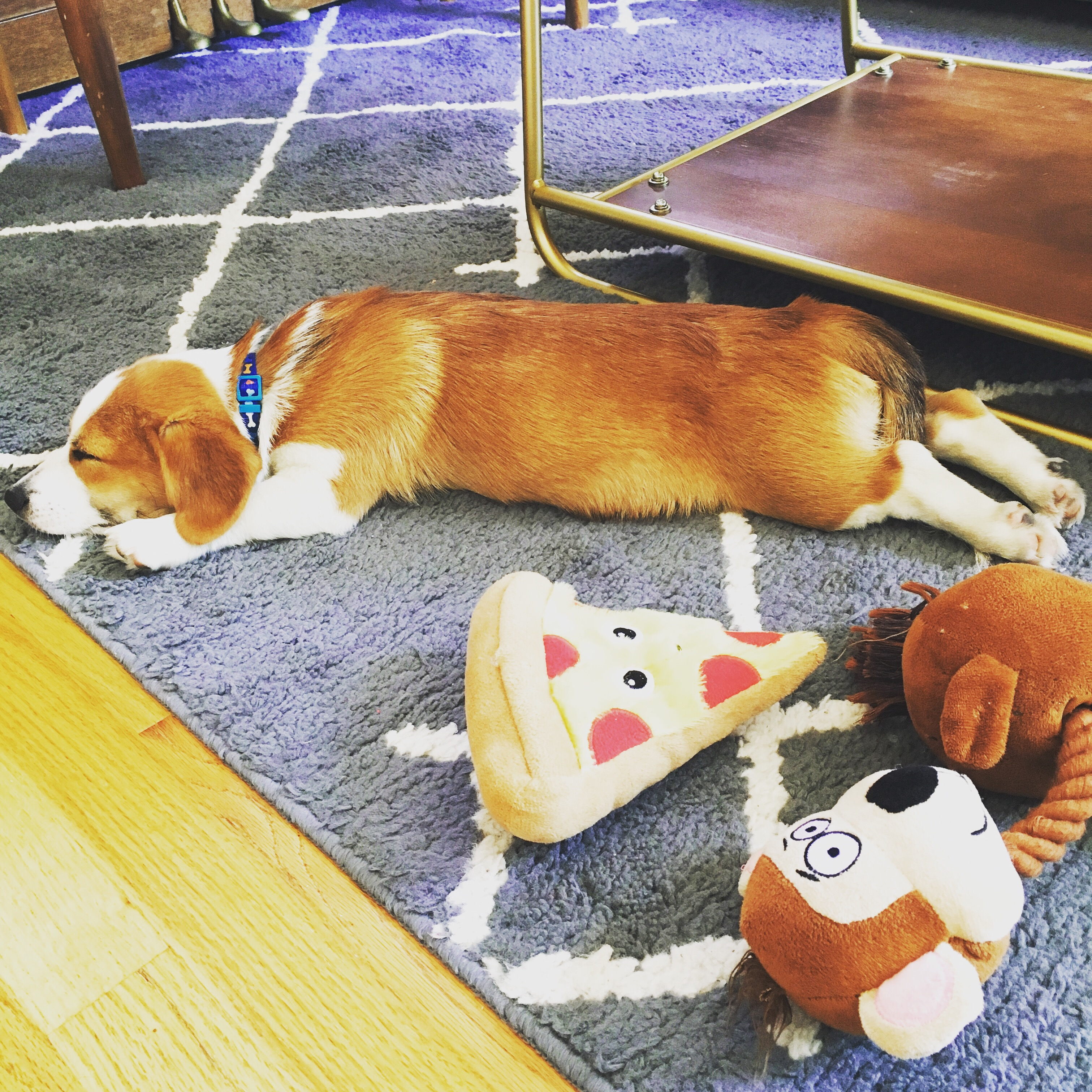 Butter sleeps with pizza and monkey toy