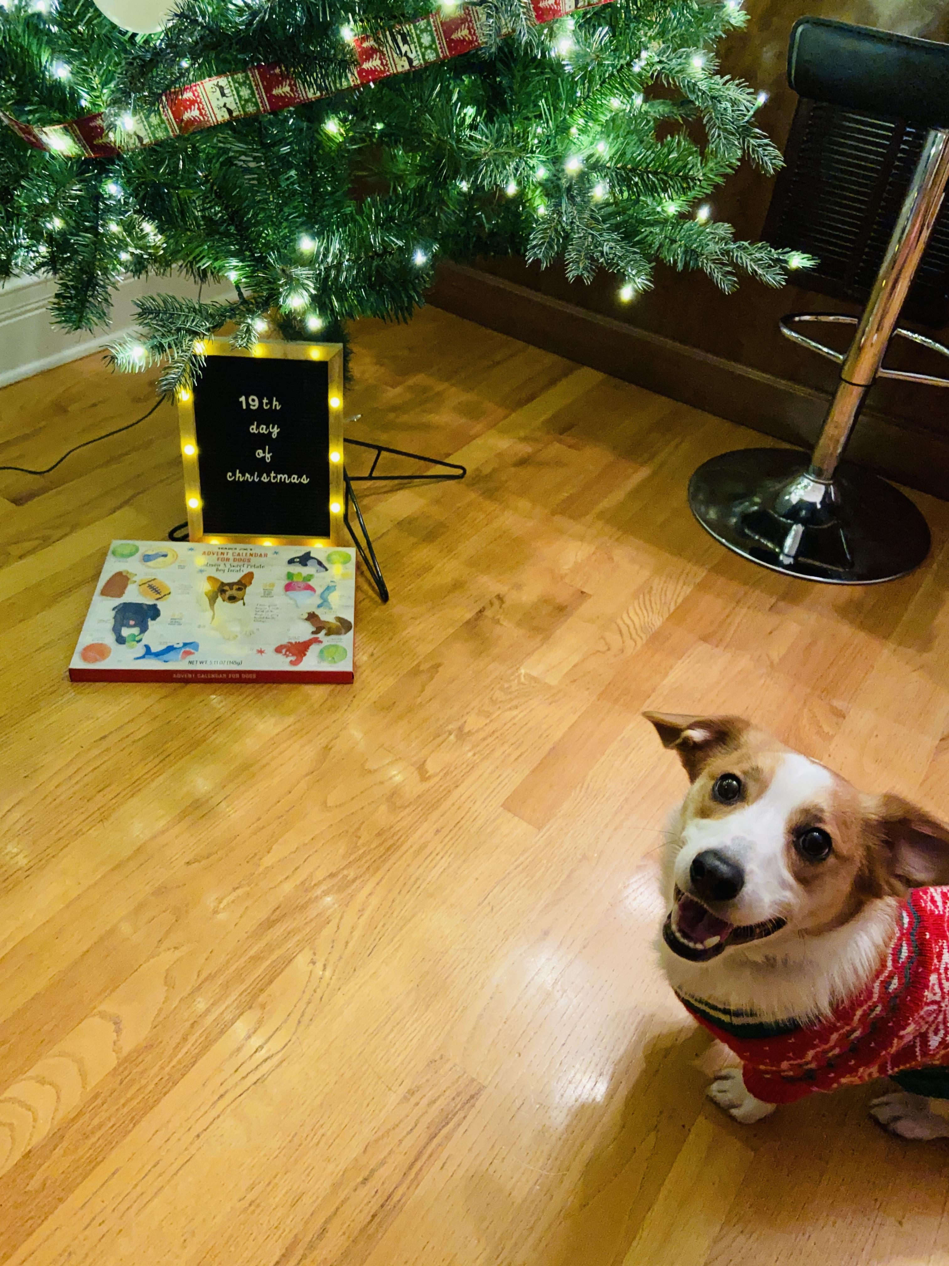 Butter wears Christmas sweater