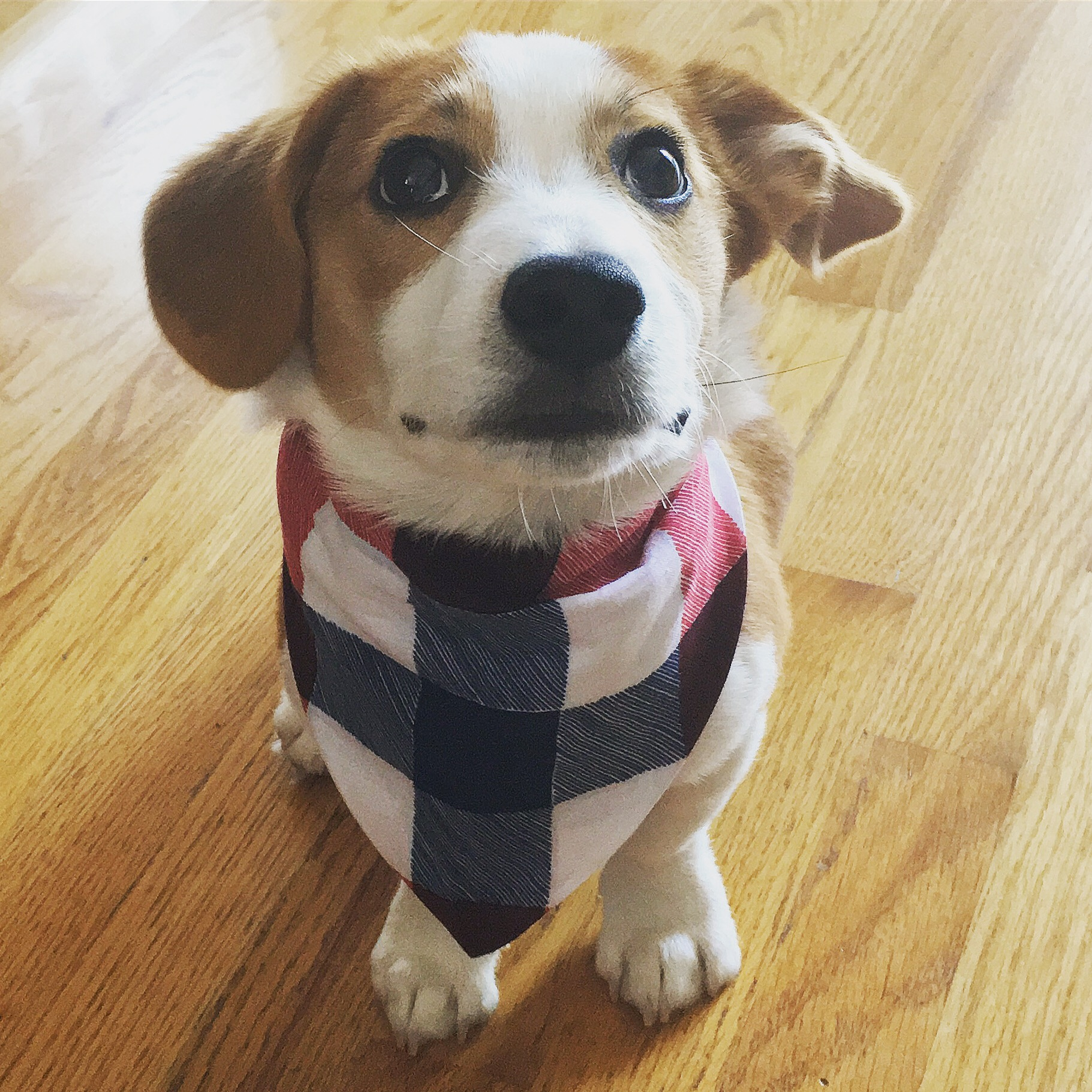 Butter wears a plaid scarf